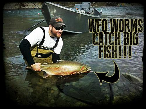 Phil Big Fish